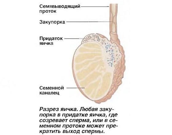 Системы органов и функции таблица