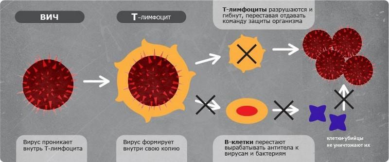 ВИЧ и Т-лимфоциты