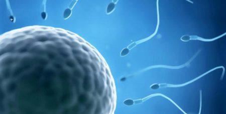 Тератозооспермия у мужчин