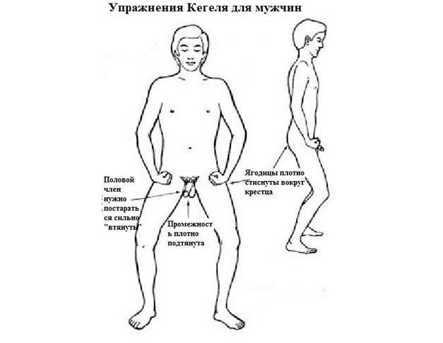 Сокращение мышц в положении стоя