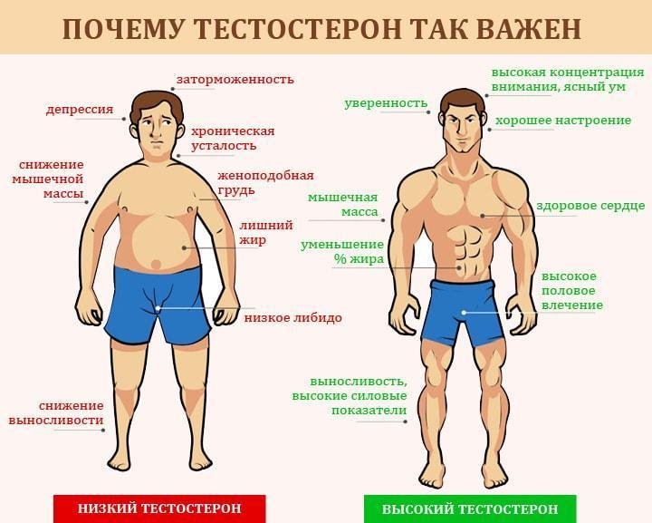Низкий и высокий тестостерон