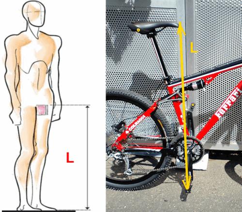 Установка высоты седла велосипеда