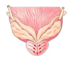 Схема движений при пальцевом массаже простаты