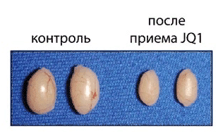 Яички мышей до и после приема препарата