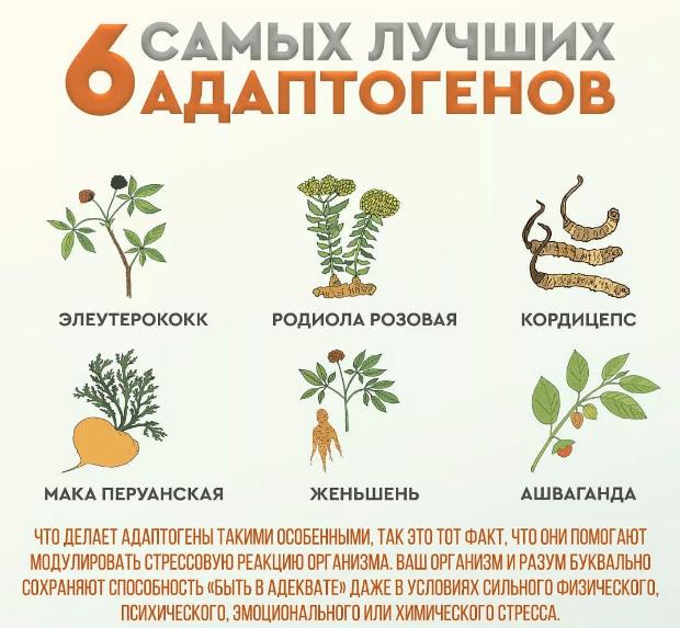 Лучшие травы-адаптогены