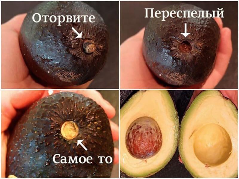 Как определить спелость по плодоножке