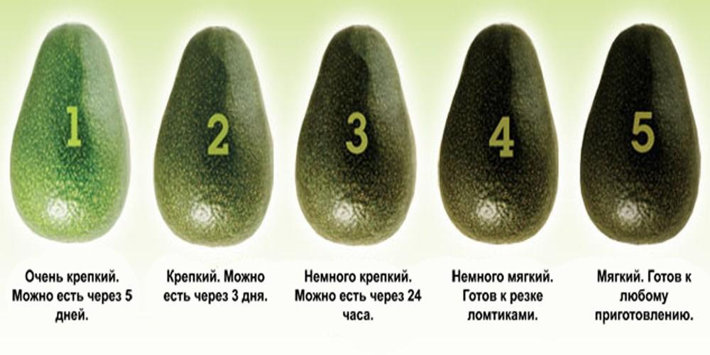Степени зрелости авокадо